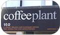 Coffee Plant Portobello